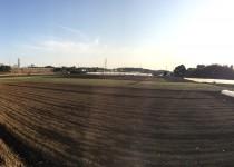 富里インター付近の畑